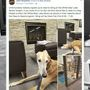 Lonely dog, looking for kids to read to him, is all booked thanks to viral post