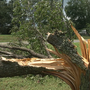 High winds, heavy rain knocks down trees, damages homes in Fredericksburg