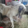 Emaciated animals seized, owner to face possible animal cruelty charges