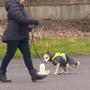 'They're super sniffers': Dogs taught to detect human waste help solve pollution origins