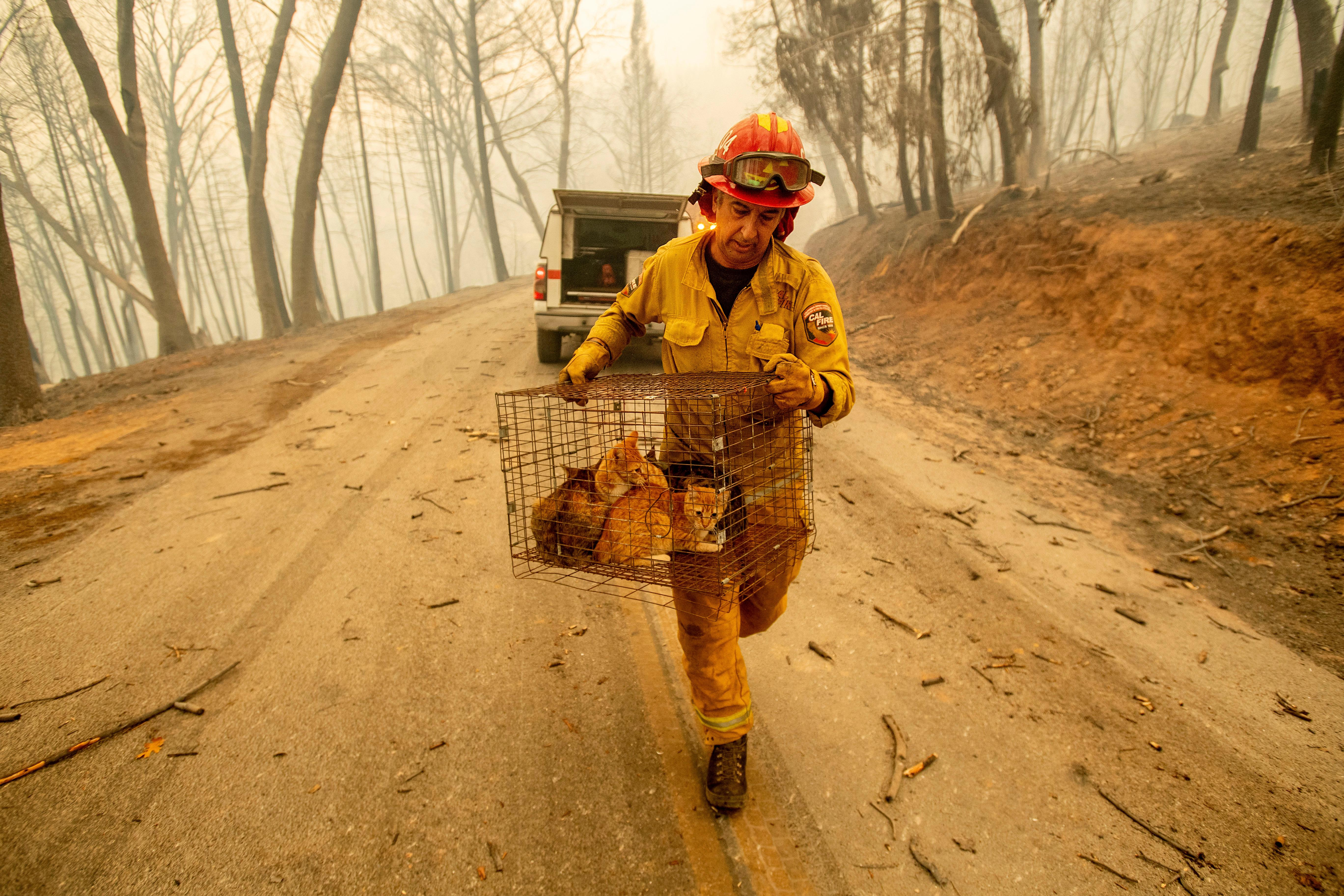 Capt. Steve Millosovich carries a cage of cats while battling the Camp Fire in Big Bend, Calif., on Friday, Nov. 9, 2018. Millosovich said the cage fell from the bed of a pick-up truck as an evacuee drove to safety. (AP Photo/Noah Berger, File)