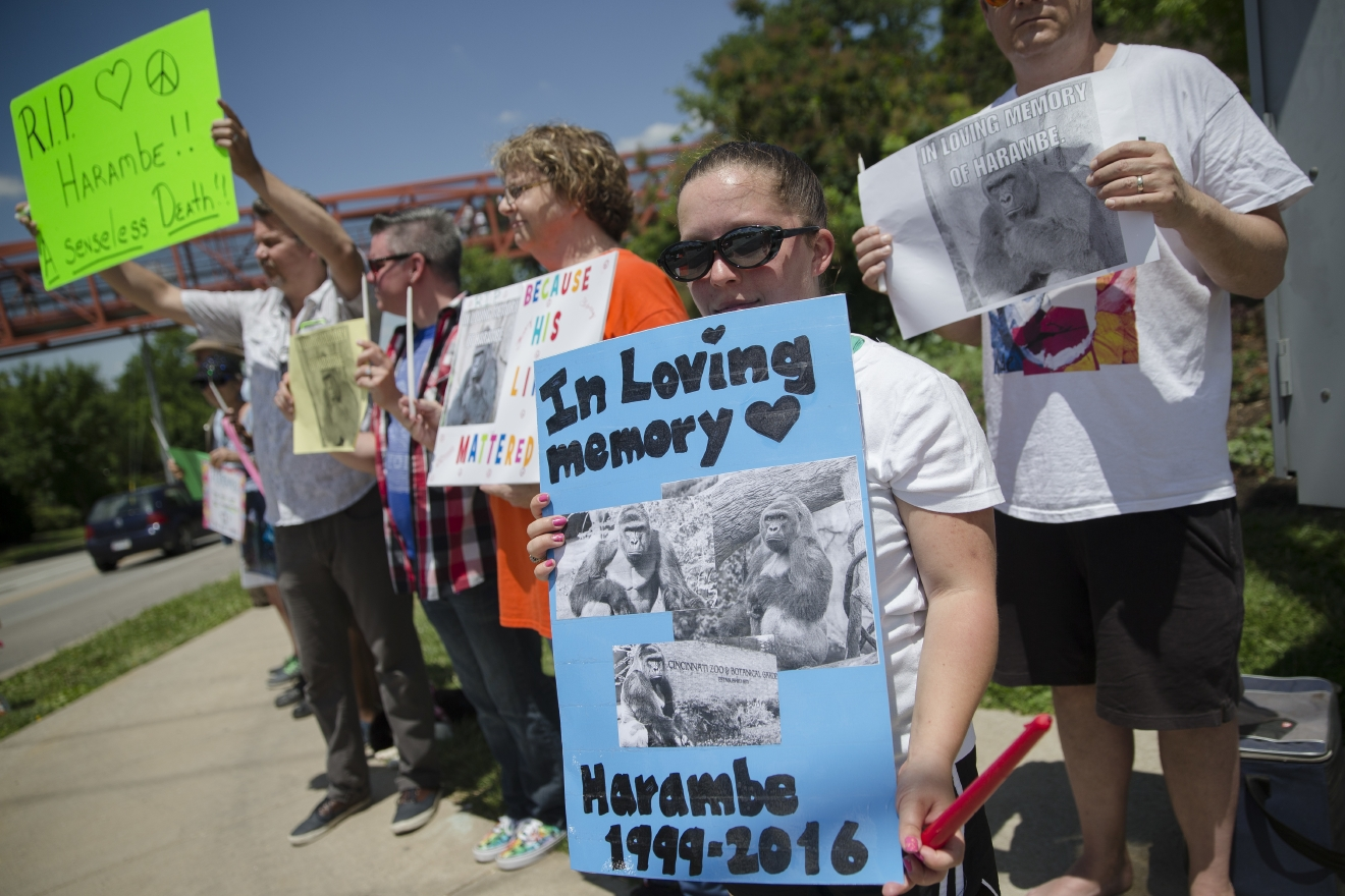 Kate Villanueva of Erlanger, Kentucky, center right, holds a sign depicting the gorilla Harambe during a vigil outside the Cincinnati Zoo & Botanical Garden, Monday, May 30, 2016, in Cincinnati.Harambe was killed Saturday at the Cincinnati Zoo after a 4-year-old boy slipped into an exhibit and a special zoo response team concluded his life was in danger. (AP Photo/John Minchillo)