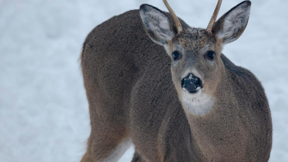 DNR seeks public comment before several deer hunting