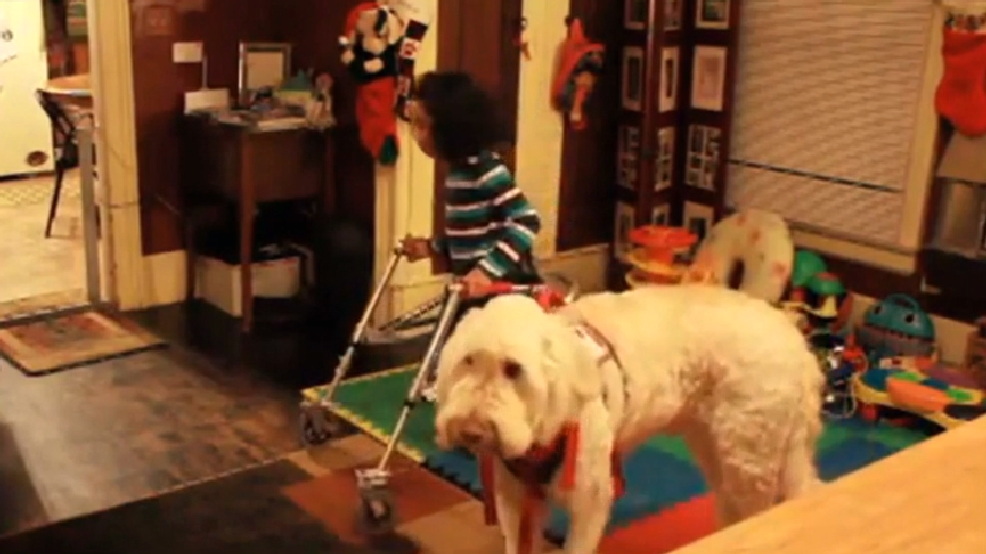Dog Show Results Washington State