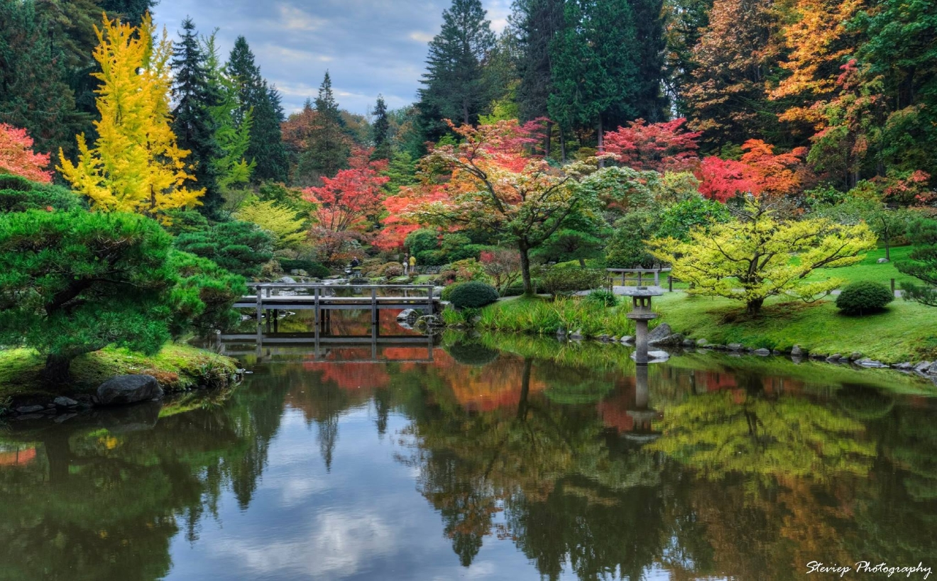 Seattle Japanese Garden: Photos: Vibrant Fall Colors Around The Pacific Northwest