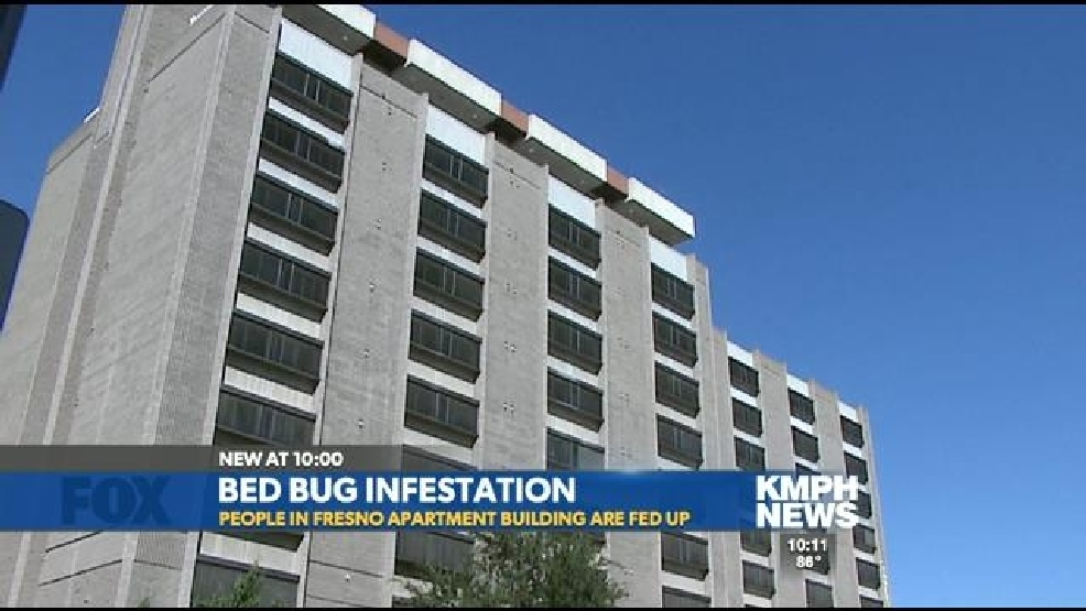 Bed Bugs Invade Fresno Apartment Building Kmph