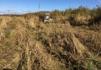 Phragmites being cut by Marsh Master all terrain vehicle.JPG