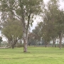 Tree clearing continues at Tulare Golf Course following Tuesday thunderstorm