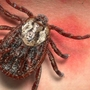 Tri-State will likely see increased tick population this year