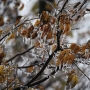 Now's the time to get ready for potential weekend ice storm