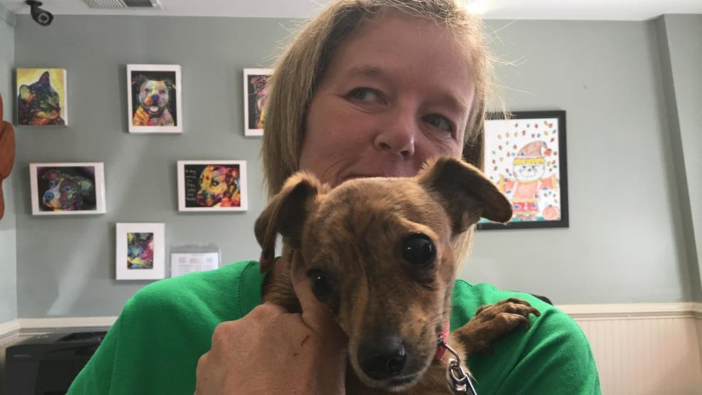 Haywood County Woman Is Devoted To Helping Lost Pets Find Their Way