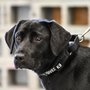 CIA fires dog from bomb-sniffing program because she just wants to play