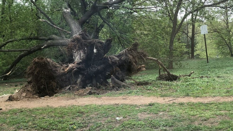 Weather damage in Baltimore   Huge tree falls near Johns Hopkins University